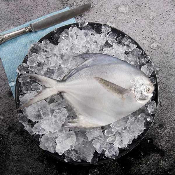 ماهی تازه جنوب را به ماهی دریا سفارش بده